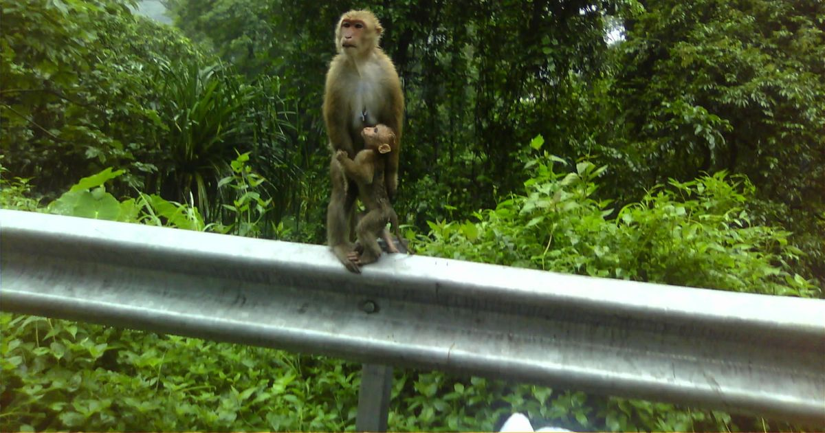 How government policies are wilfully and recklessly threatening India's wildlife reserves