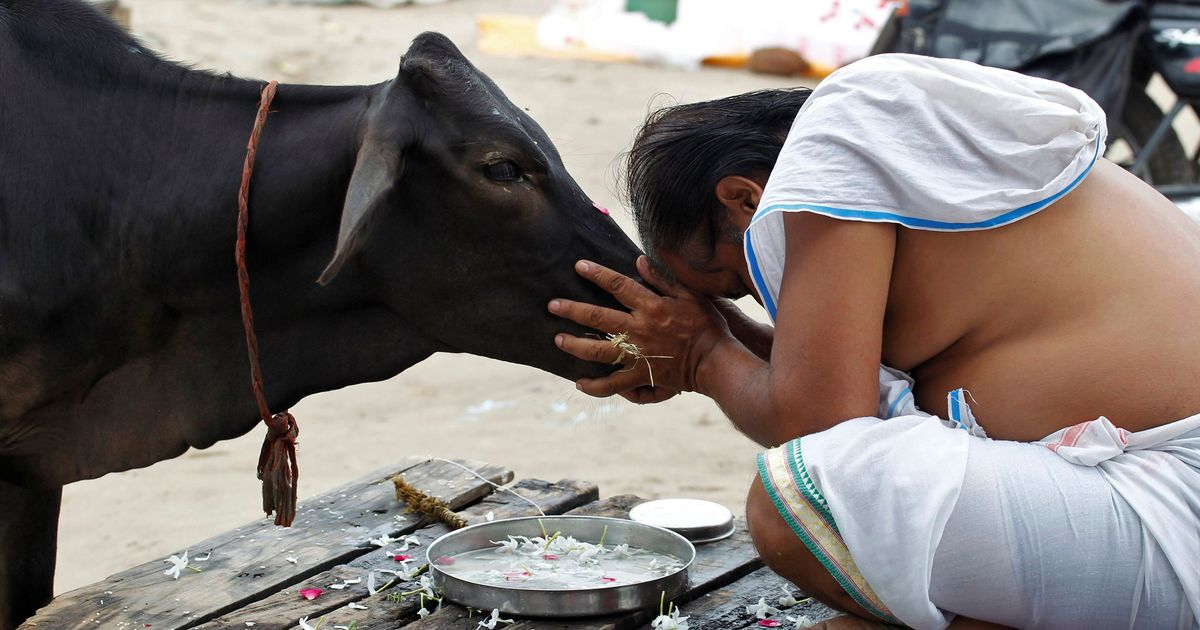 Cow protectors are victims, not tyrants, media ignores deadly attacks on them, claims VHP