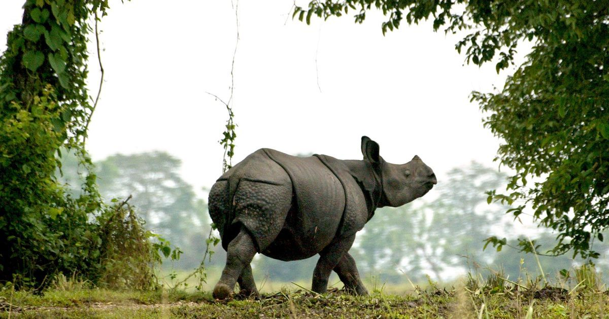 Assam is taking on wildlife crimes with fast-track courts, tighter investigation, even rewards