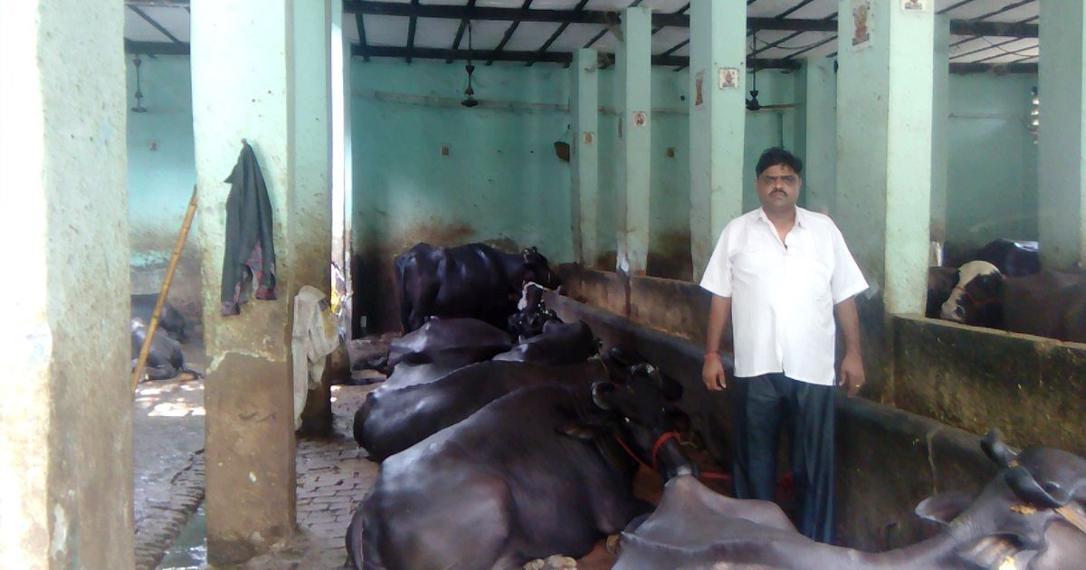 SC puts cattle trade rules on hold but Delhi's buffalo market is deserted – for fear of mobs