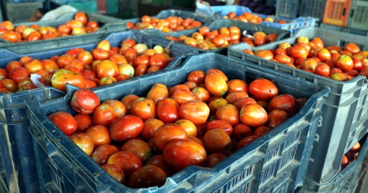 Lucknow: Congress sells tomatoes for Rs 10 a kg in protest against price rise