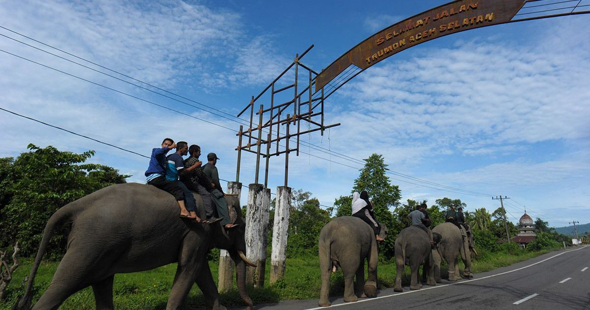 Road projects are threatening the biodiversity of Sumatra's last great rainforests