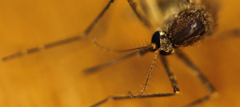 Lab notes: A World War era drug may be useful in combating malaria