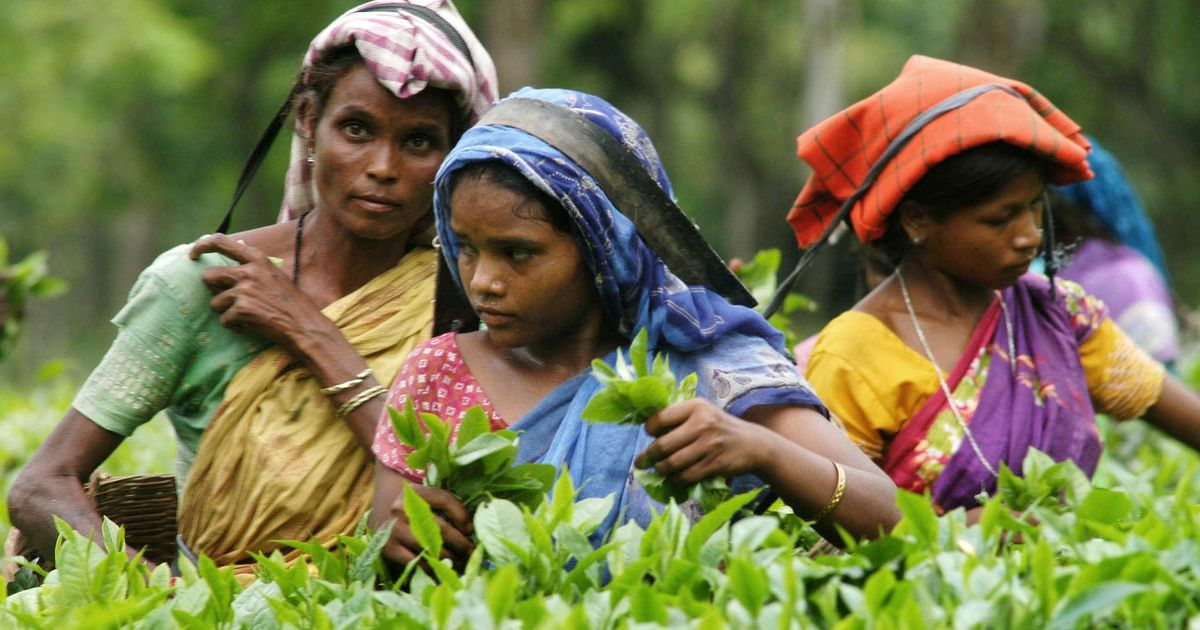 Assam tea workers who hoisted tricolour bare-chested while shouting slogans booked for disrespect