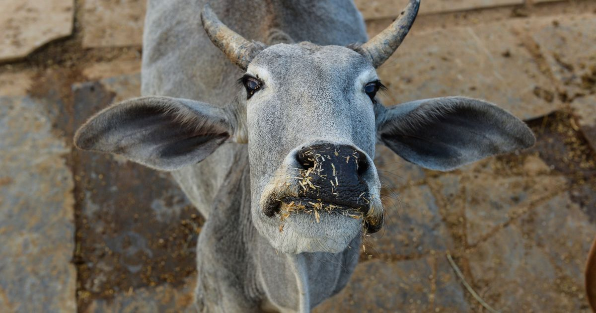 Jammu and Kashmir: Cow vigilantes attack man 'moving around' with cattle in Rajouri district