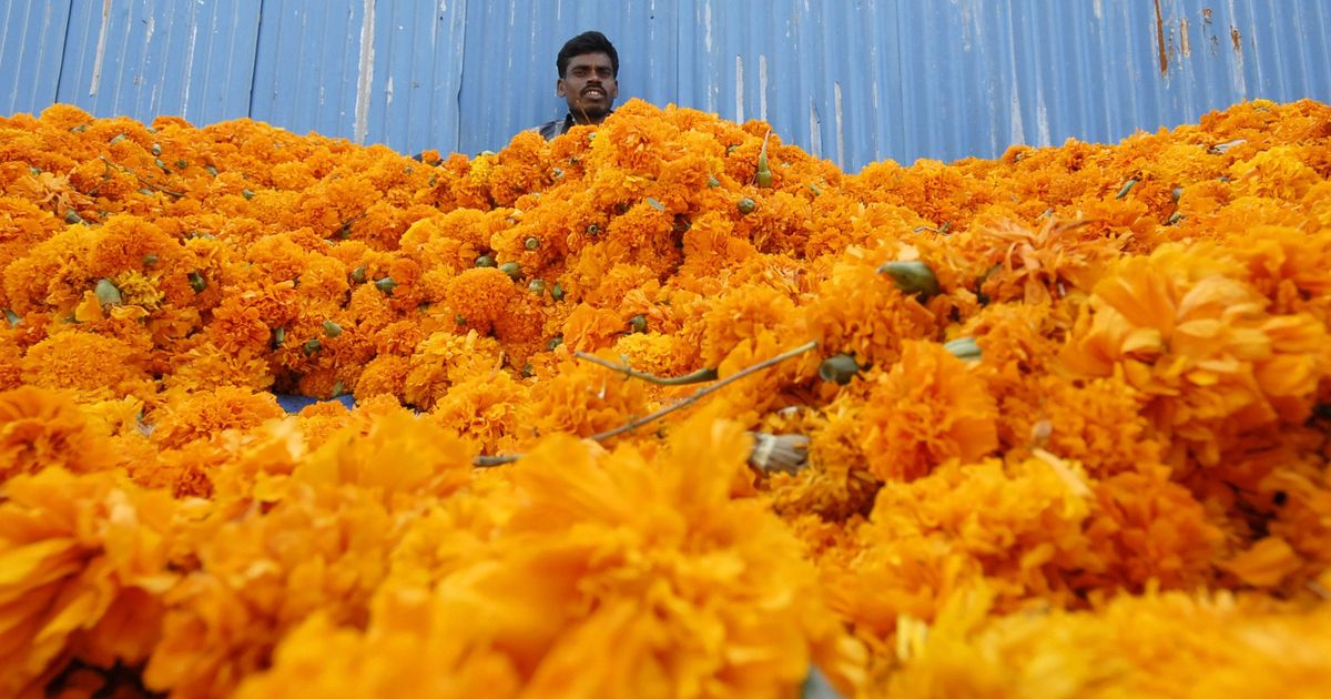 Ferns N Petals: How a small South Delhi shop bloomed into Indians' chosen florist