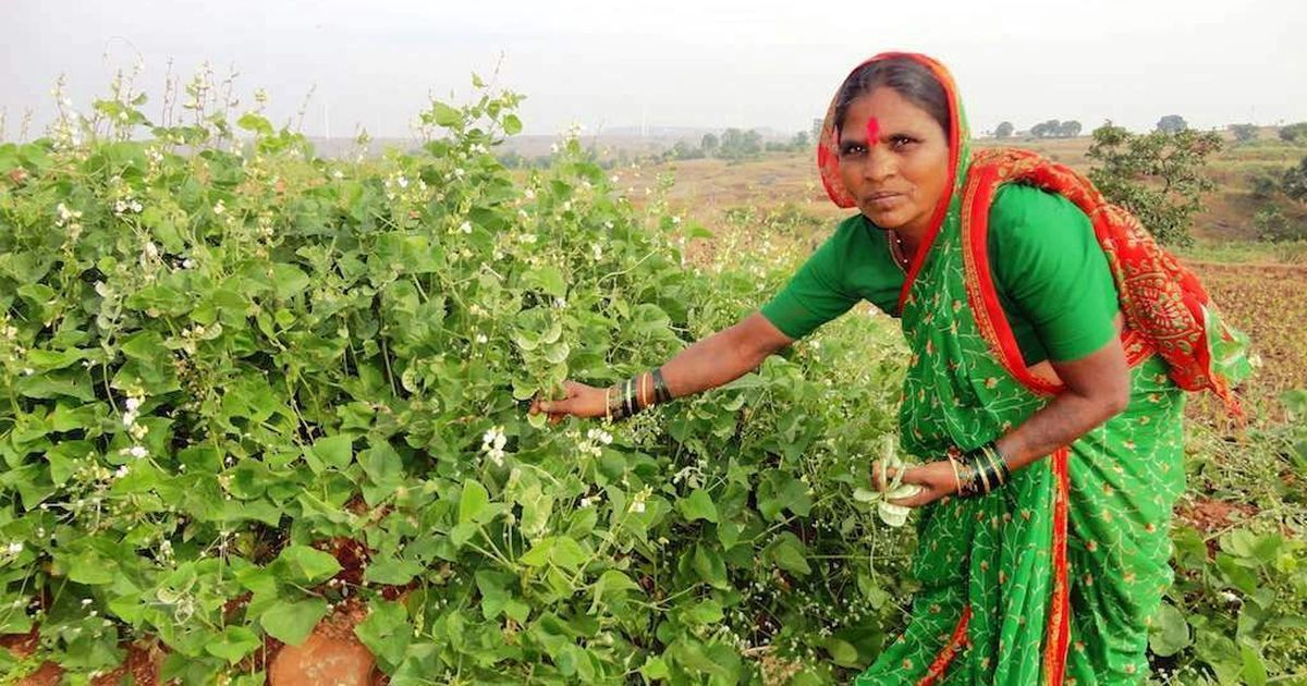 Meet Maharashtra's 'Seed Mother', who pioneered a movement to conserve indigenous seeds