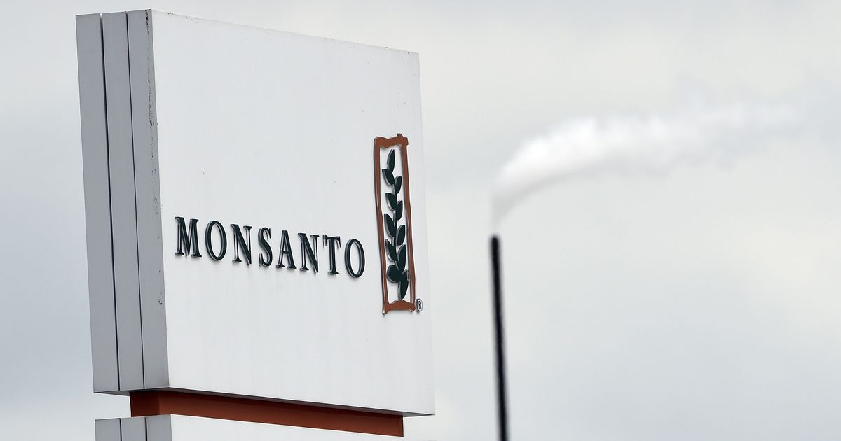 Monsanto will sell its small branded cotton seed business to local firm in India