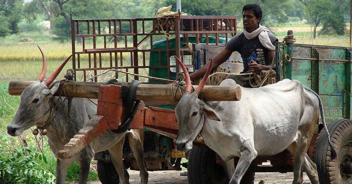 Police clear six men accused of lynching dairy farmer Pehlu Khan in Alwar