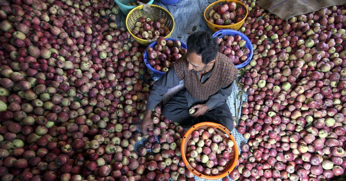 In poll-bound Himachal Pradesh, apple growers and traders are still hurting from note ban and GST