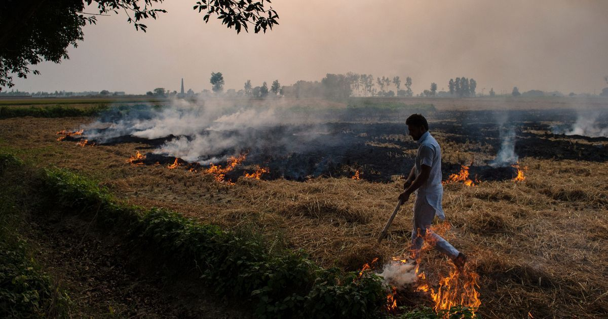Air pollution: High Court questions North Indian states about steps being taken against crop burning