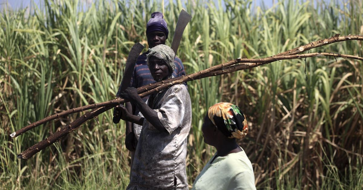 In Nigeria, testing farm workers for malaria increases their wellness and productivity