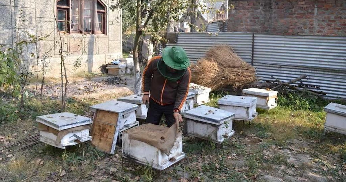 Honey processing is yielding sweet returns for farmers in the Kashmir Valley