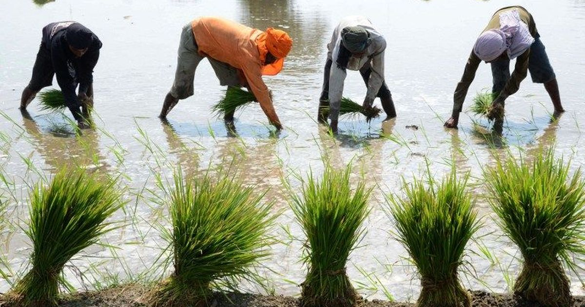 Odisha government advises paddy farmers to shift harvested crops after IMD warns of heavy rain