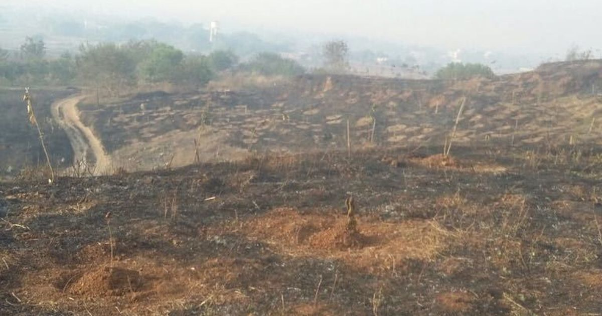 At least 20,000 trees burnt down allegedly by land-grabbers in Maharashtra's Mangrul town