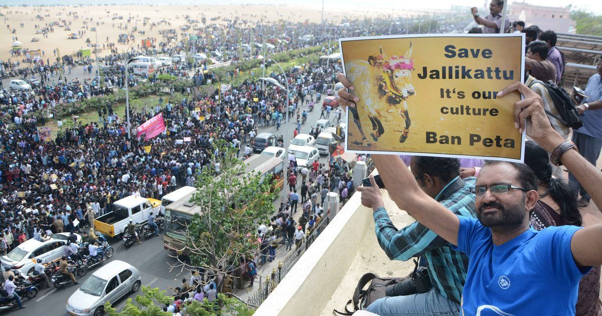 'We work in IT firms, deliver milk every morning': How Chennai jallikattu stir animated young people