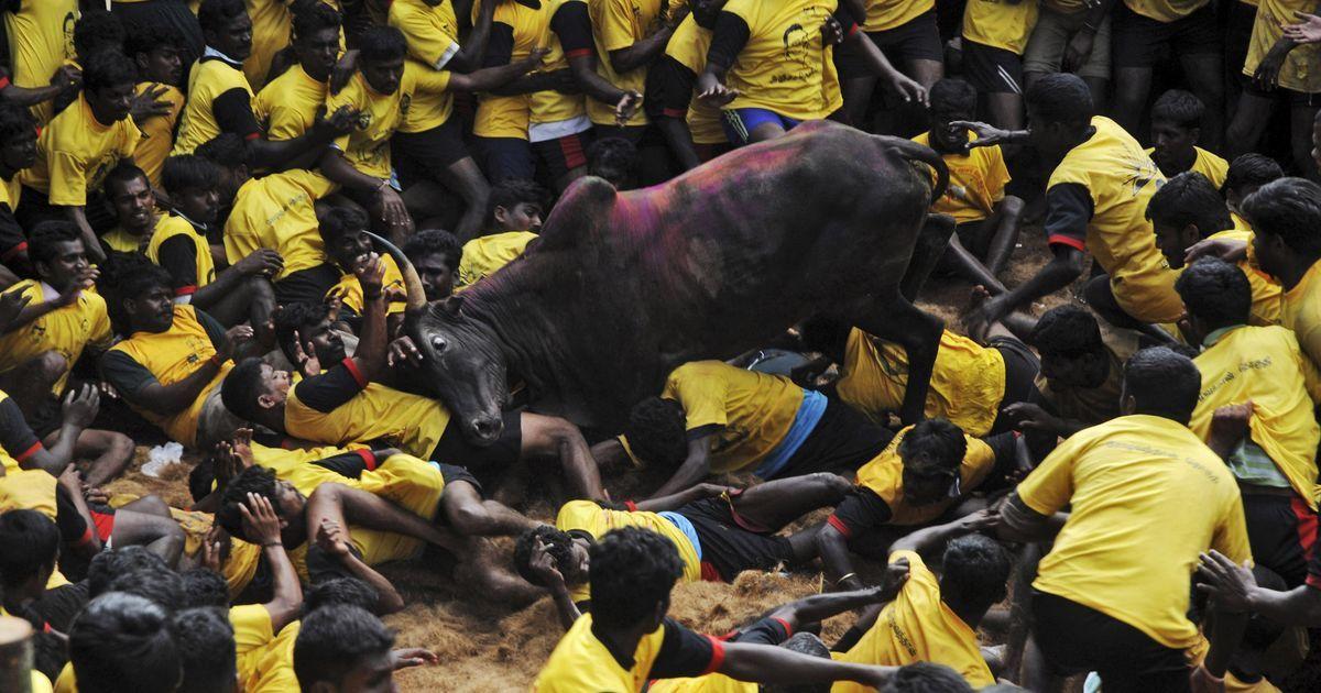 Jallikattu in Tamil Nadu: Teen dies while watching bull-taming sport in Madurai