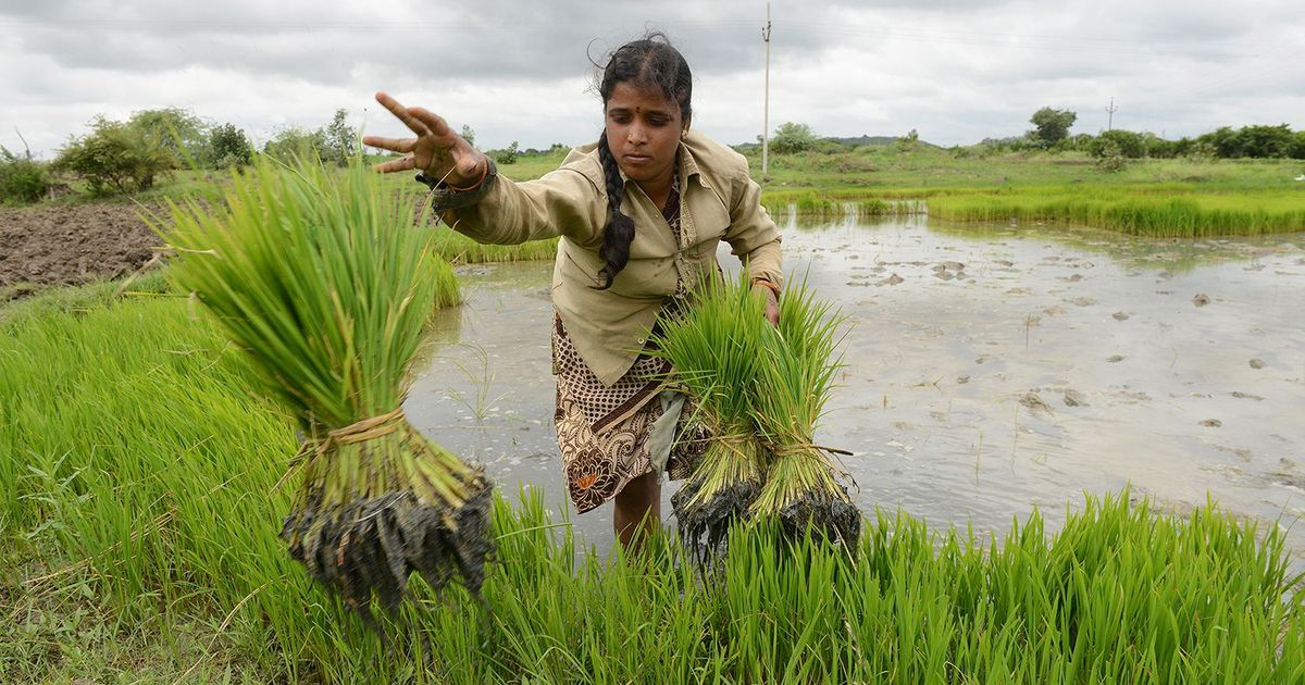 This year's Economic Survey is likely to focus on rural economy, agriculture, with eye on 2019 polls