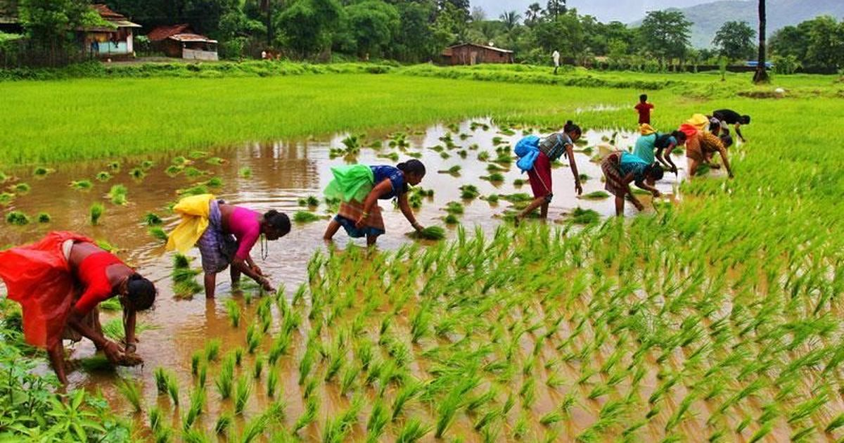 Budget 2018: Government raises minimum support price of majority of crops by 1.5 times