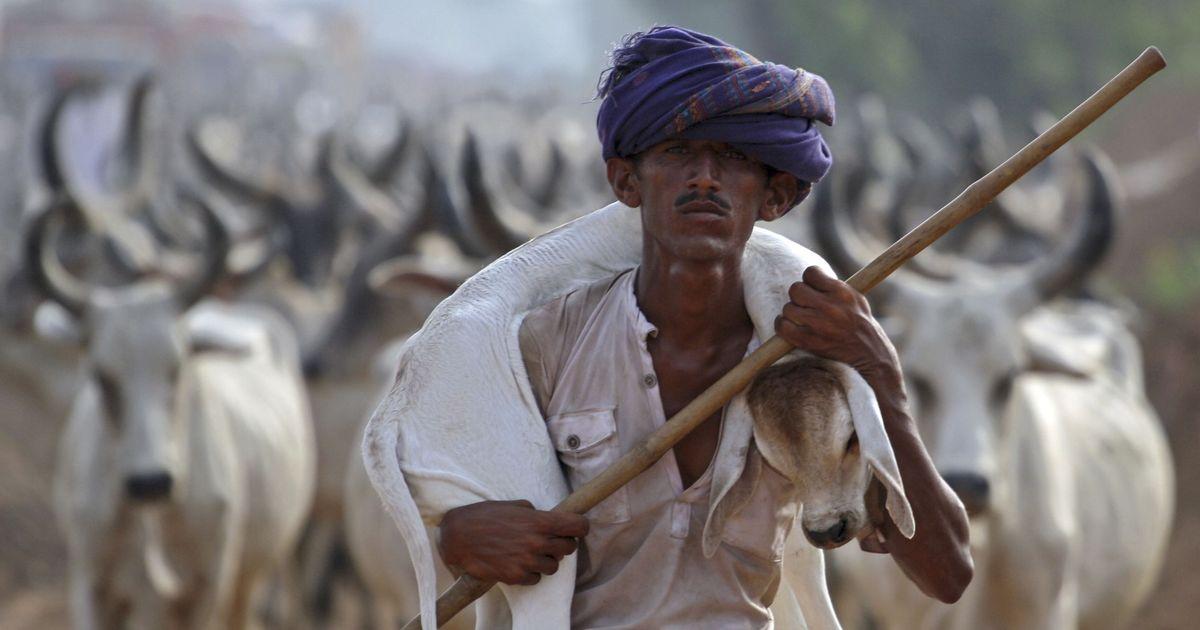 Budget 2018: Arun Jaitley announces Gobar Dhan scheme for managing cattle dung