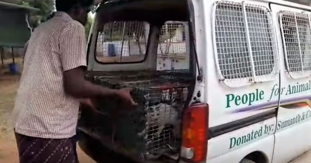 In Chennai, a debate about cat meat after NGO's crackdown on nomadic community