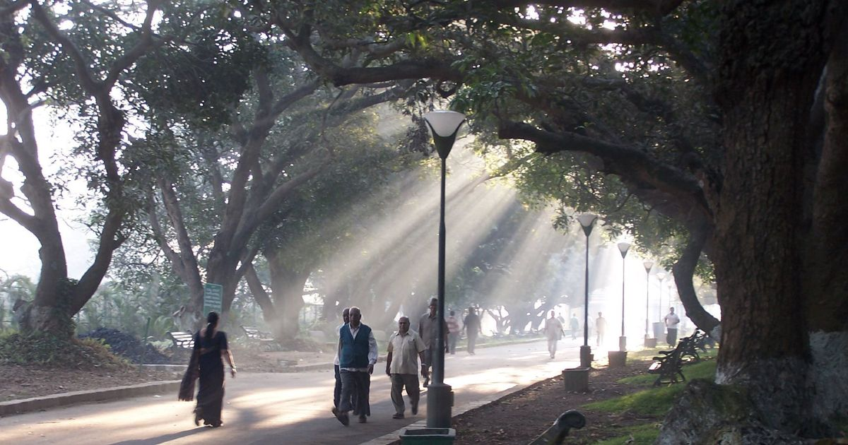Trees chosen for urban landscapes might be aggravating asthma and allergies