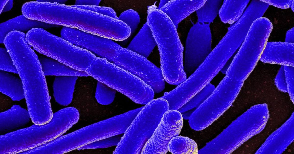 Lab notes: Researchers decipher antibacterial mechanism of naturally occurring chemical