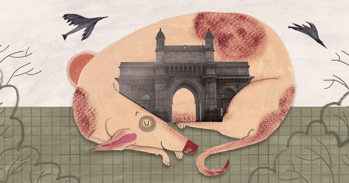 Mumbai's doughty strays and their kind caretakers get a pictorial ode in a new children's book