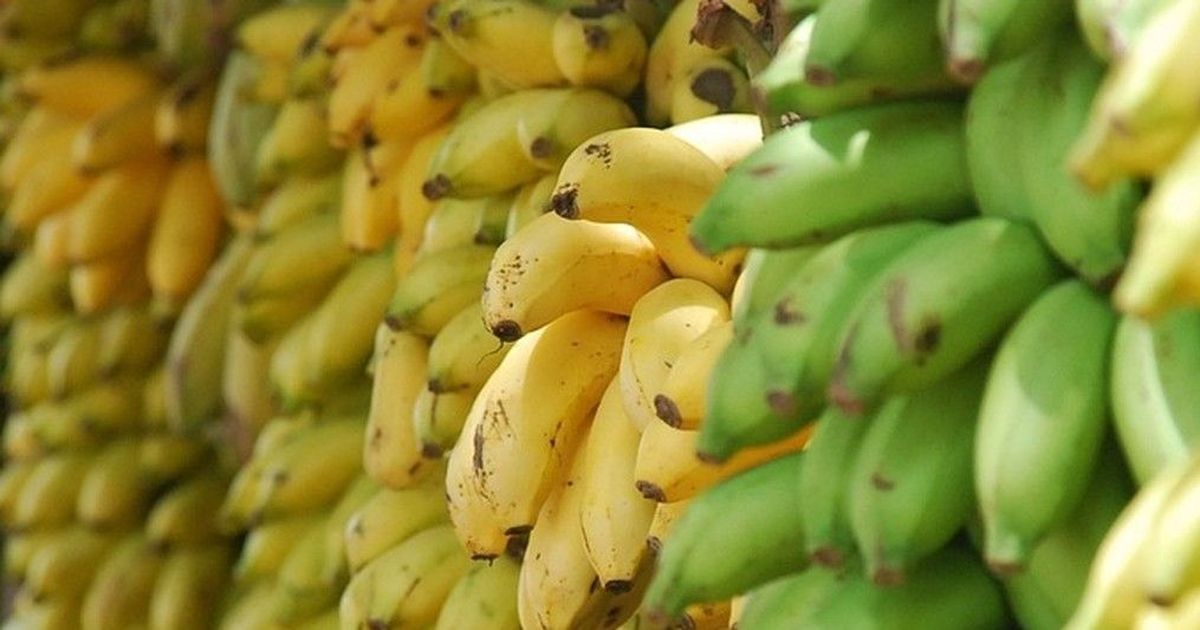 The day 385 years ago when bananas made their British debut