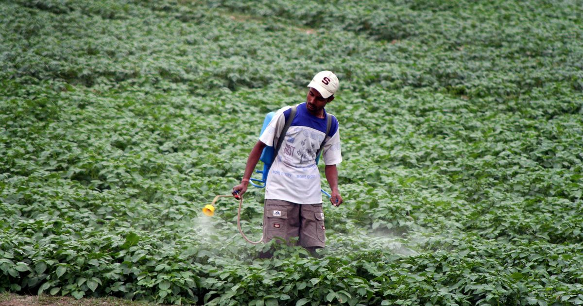 From Maharashtra to Tamil Nadu, government failure to regulate pesticides  is causing farmer deaths