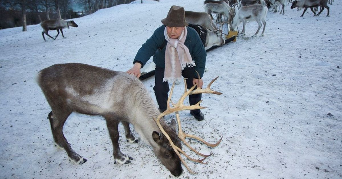 Arctic reindeer herders find out what they share with Himalayan yak herders at a high-altitude meet