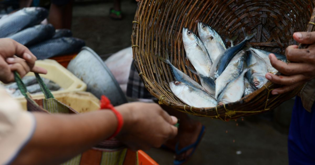 Over-exploitation is threatening to take the prized hilsa away from West Bengal's waters