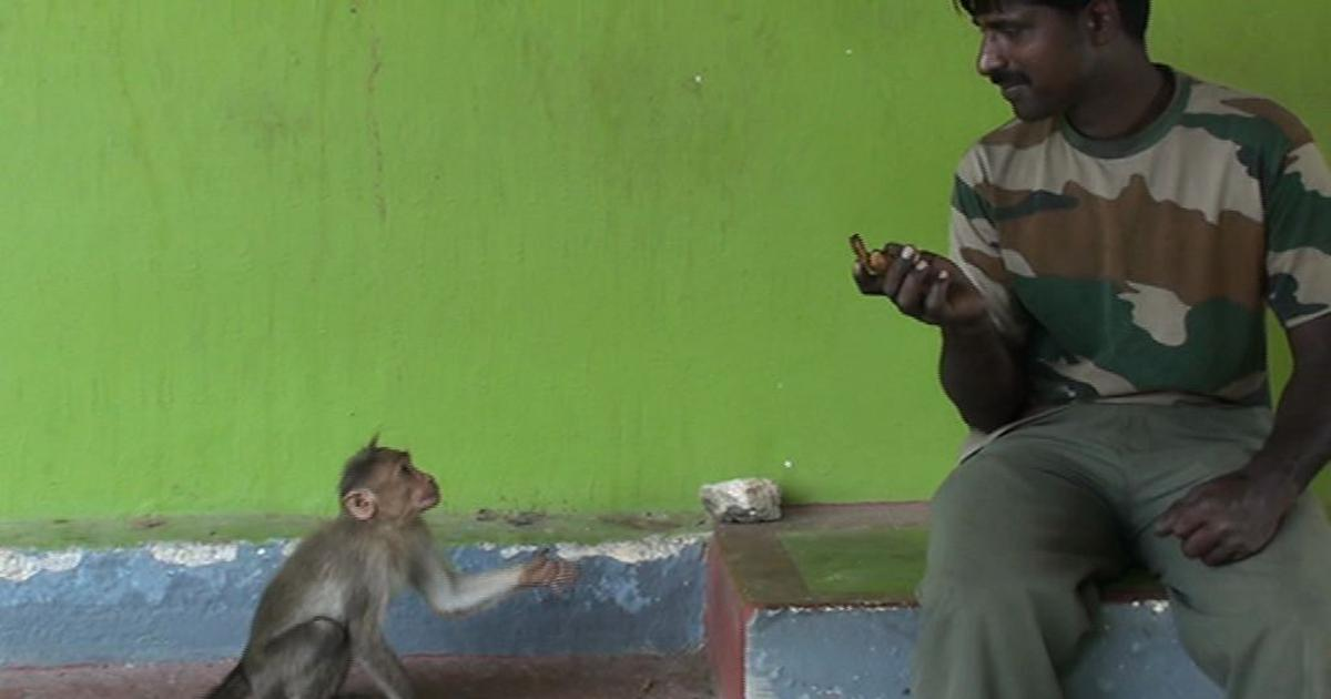 Macaques in Bandipur have learnt how to beg visitors for food, say researchers
