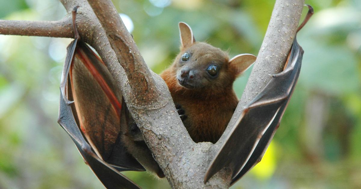 As Nipah infections are confirmed in Kozhikode, Kerala health officials caution against panic