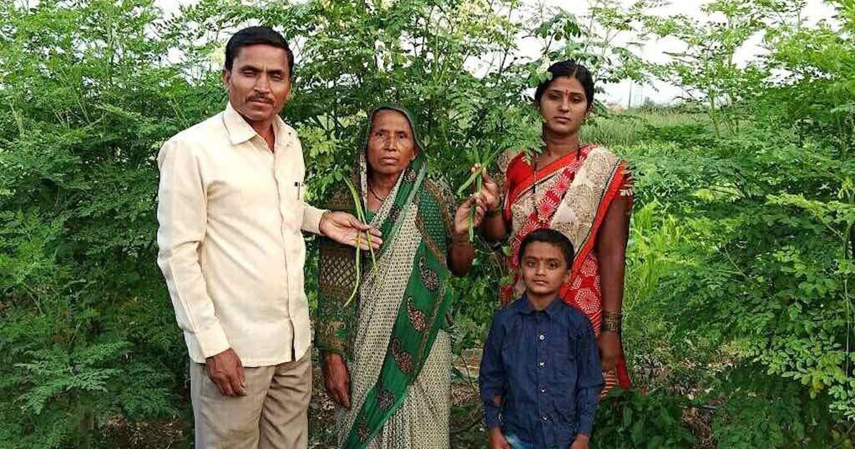In Maharashtra's arid Solapur, many farmers are prospering by growing drumstick