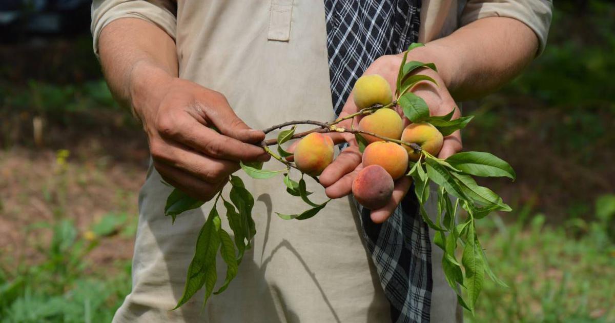 Shorter, hotter, earlier: In Pakistan, shrinking spring is slashing harvests