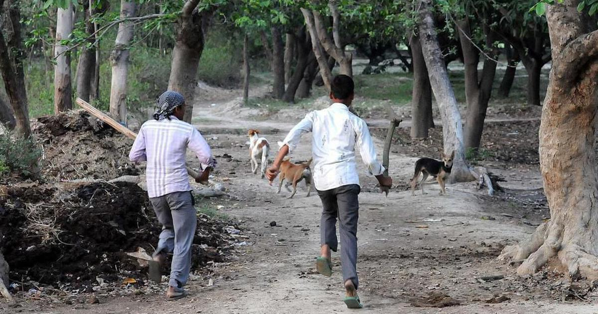 Uttar Pradesh: Pack of stray dogs allegedly mauls two-year-old girl to death in Ghaziabad