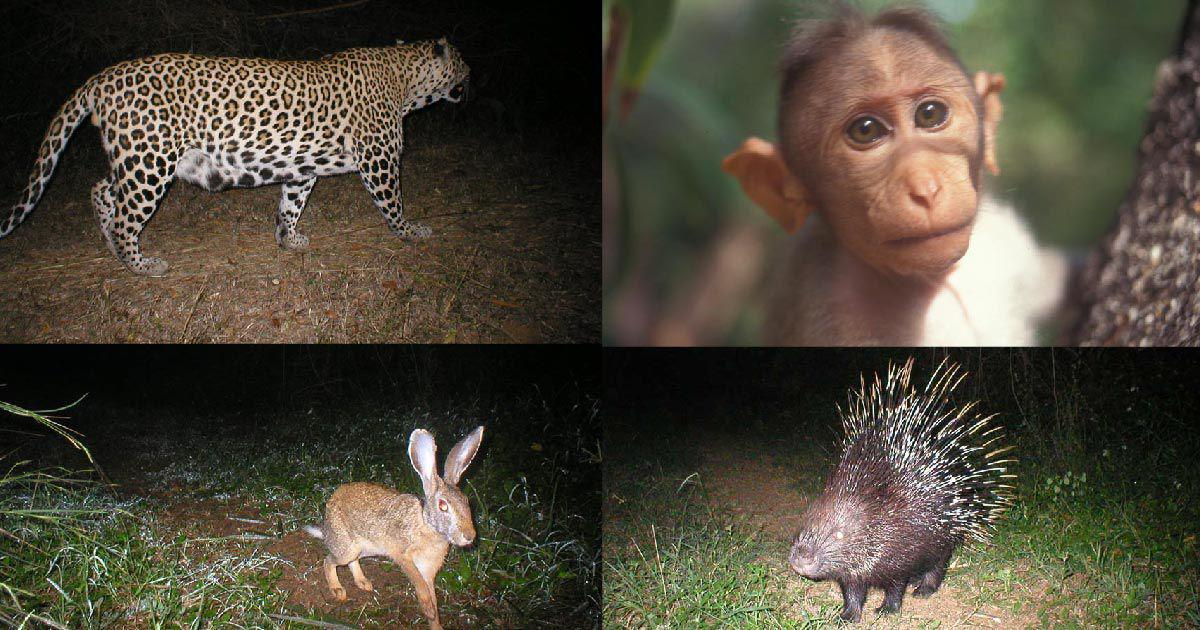 How we turned a barren plot outside Chennai into a jungle that is now home to leopards and civets