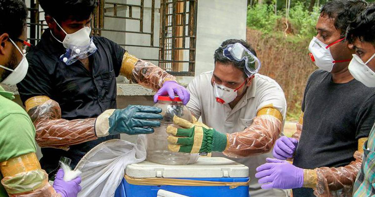 Nine days after detecting Nipah, Kerala is yet to nail the carrier of the deadly virus