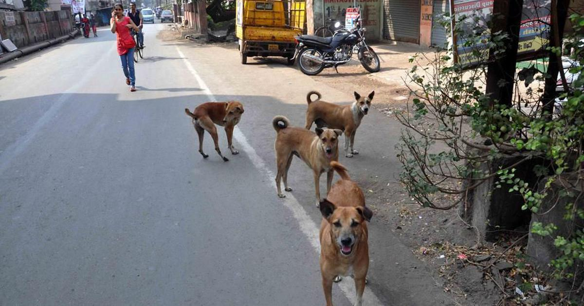 Uttarakhand High Court asks state to get rid of all stray dogs in six months