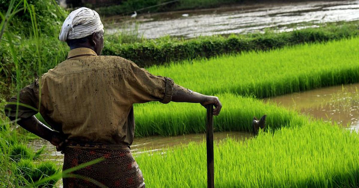 Kerala's altered conservation law will decimate its paddy fields and wetlands, critics say