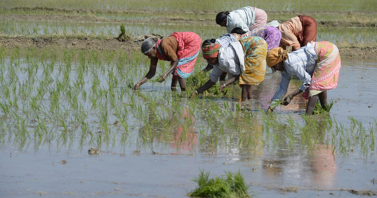 Cabinet increases minimum support price for paddy by 13%, steepest hike since 2012-'13