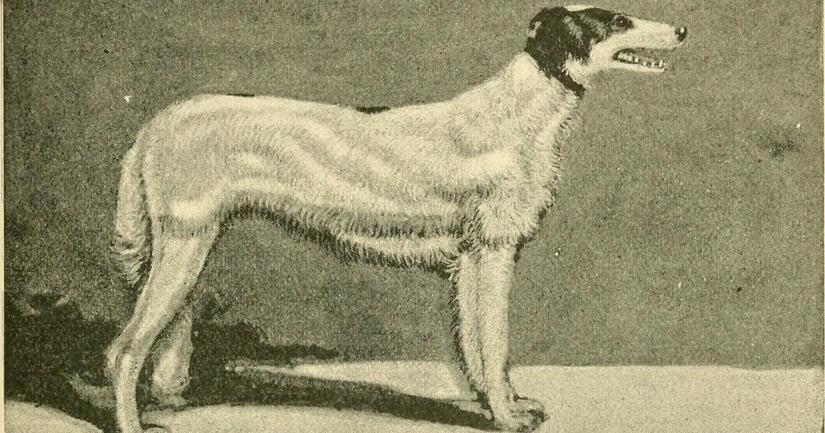 How American dogs disappeared and left behind a contagious cancer