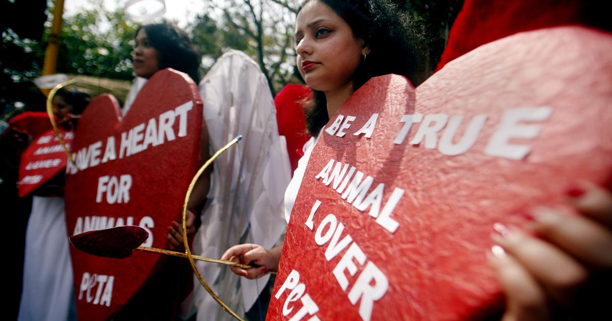 'Include bestiality as offence under law against animal cruelty,' PETA India tells Centre