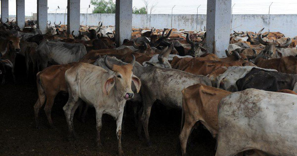 Uttarakhand will close all slaughterhouses and set up shelter houses for cows, says chief minister