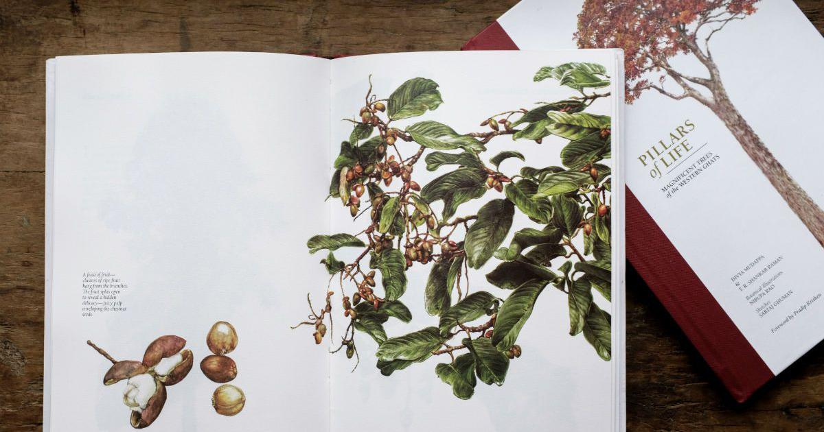 This illustrator's sketches of South India's wondrous plants are lessons in art and botany