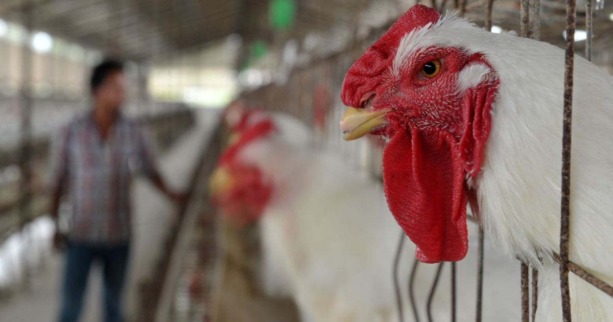 India and China are top hot spots of antimicrobial resistance in animals, shows new study