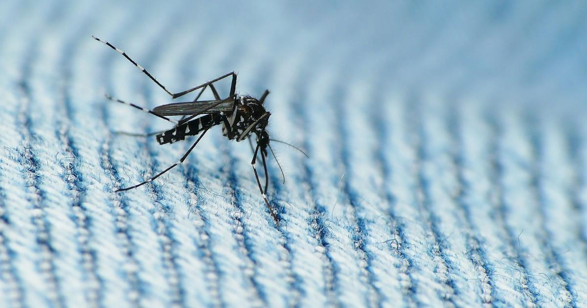 Genetically modifying mosquitoes to control diseases sounds good in theory – but it has its risks