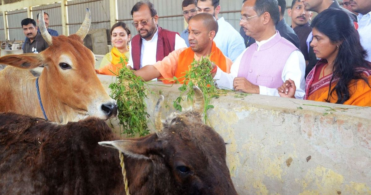 UP: IAS officer among five officials suspended because of alleged negligence in managing cow shelter