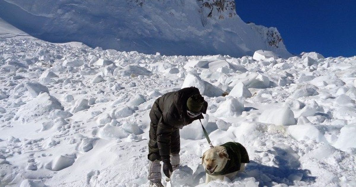 Ladakh: Two Indian Army personnel killed in avalanche in Siachen glacier